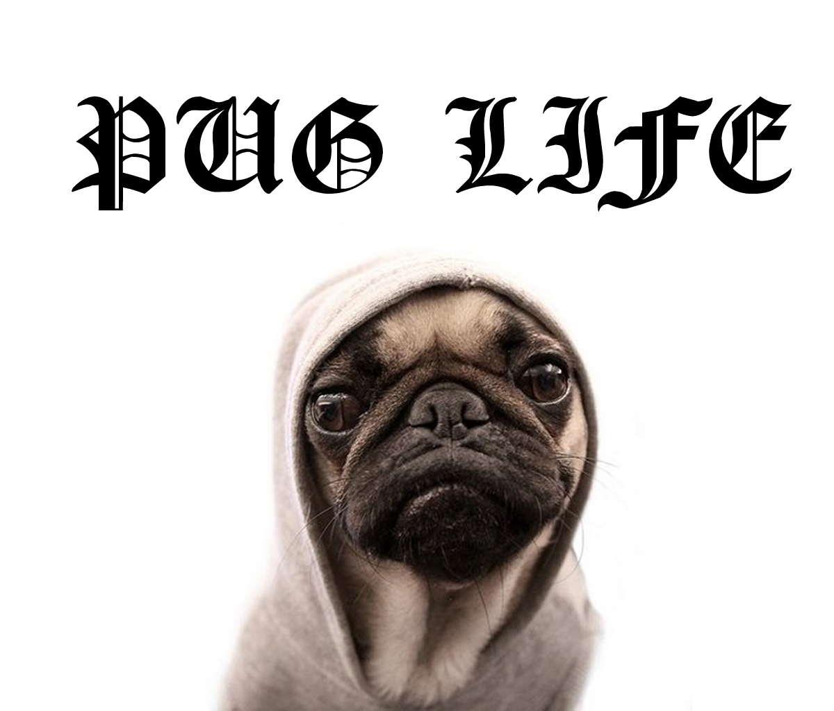 pug-life-funny-pictures