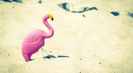 summerflamingo