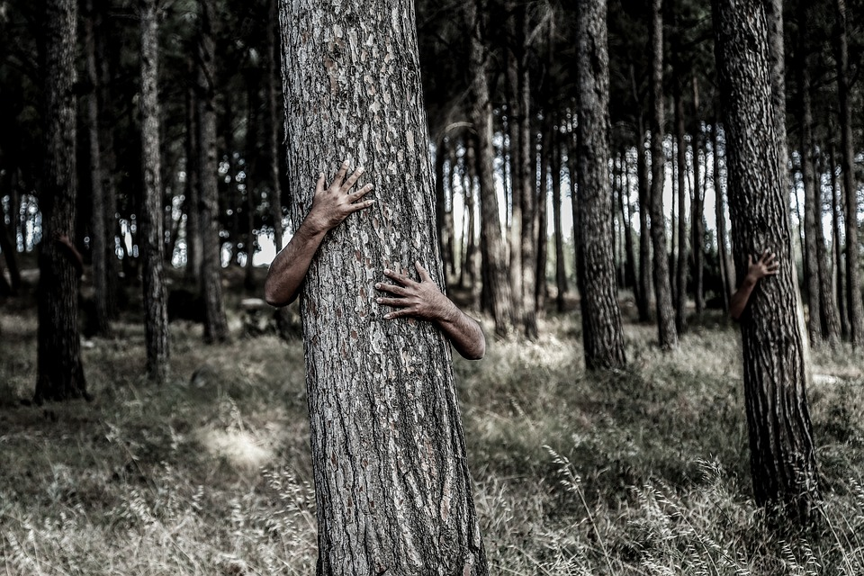 Hidden Invisible Hiding Camouflage Hands Tree